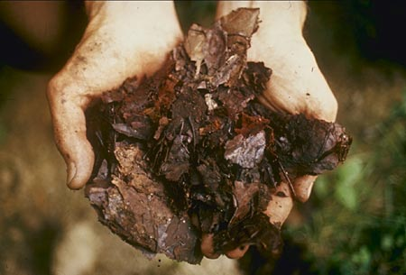 Photograph of a person holding a handful of compost.