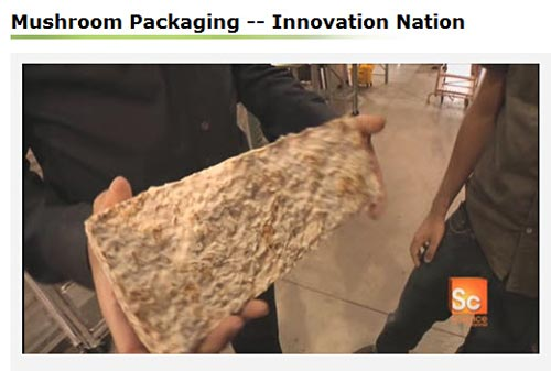 Video on using fungus for packaging materials.
