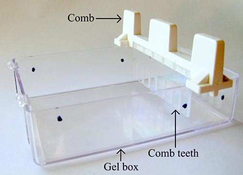 Picture of gel box and comb.