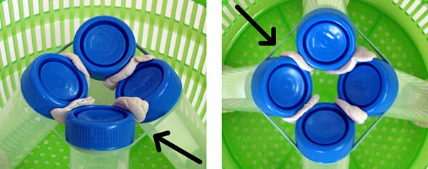 Picture of four tubes in the salad spinner. Biotechnology science project