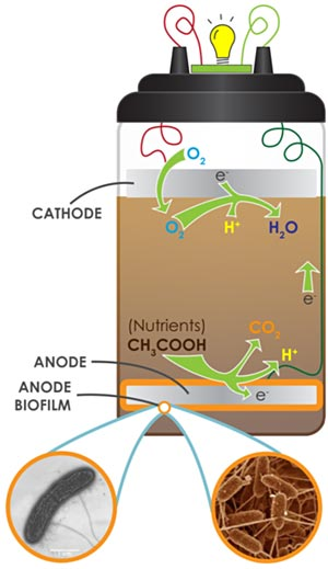 Diagram of the chemical reactions taking place inside a microbial fuel cell.