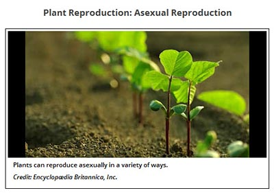 Plant Biology video of plant reproduction screenshot