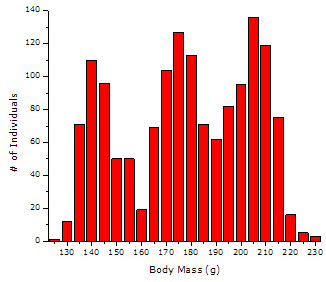 simulated data: multimodal histogram of body mass for a hypothetical mixed population of fish