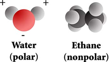 Polar and nonpolar chemicals (water and ethane).