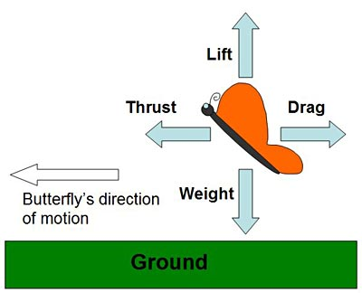 lift, drag, weight, and thrust on a butterfly