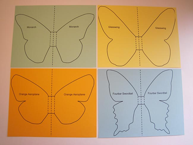 outlines of different butterfly species