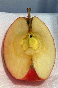 Photograph of an apple quarter