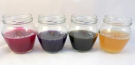 Four glass jars filled with different concentrations of cabbage juice solutions