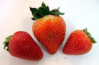 Photo of three strawberries.