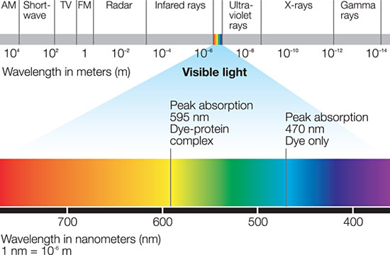 Electromagnetic spectrum showing where coomassie absorbs.