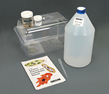 Carolina daphnia magna culture kit