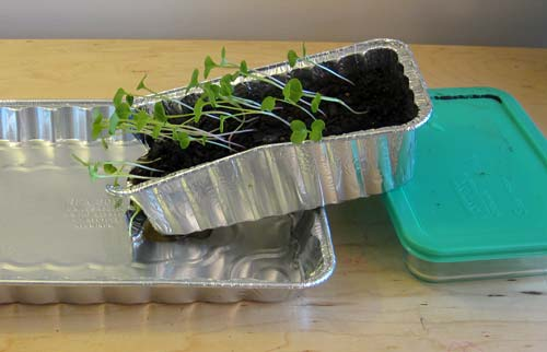 Can Plants Stop Soil Erosion?