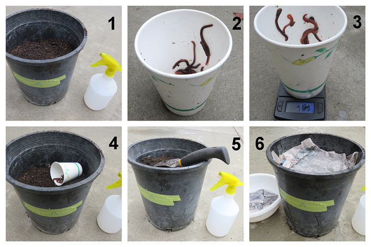 Six images show the process of adding worms to a composting pot