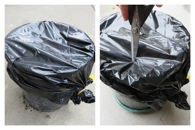 A black plastic bag is stretched over the top of a composting pot and airholes are poked through the top