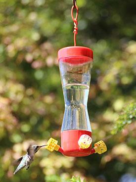 Hummingbird visiting feeder with sugar solution