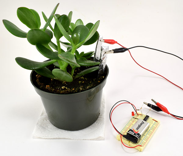 Soil moisture sensor with probes inserted into the soil around a potted plant