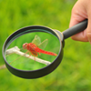 Life Sciences; photo of an insect under a magnifying glass