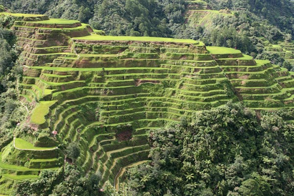 Follow the flow for Terrace farming meaning