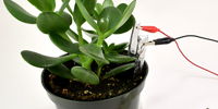 Agricultural Technology - Plant Moisture Sensor