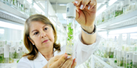 Agricultural Technology -  Plant Scientist
