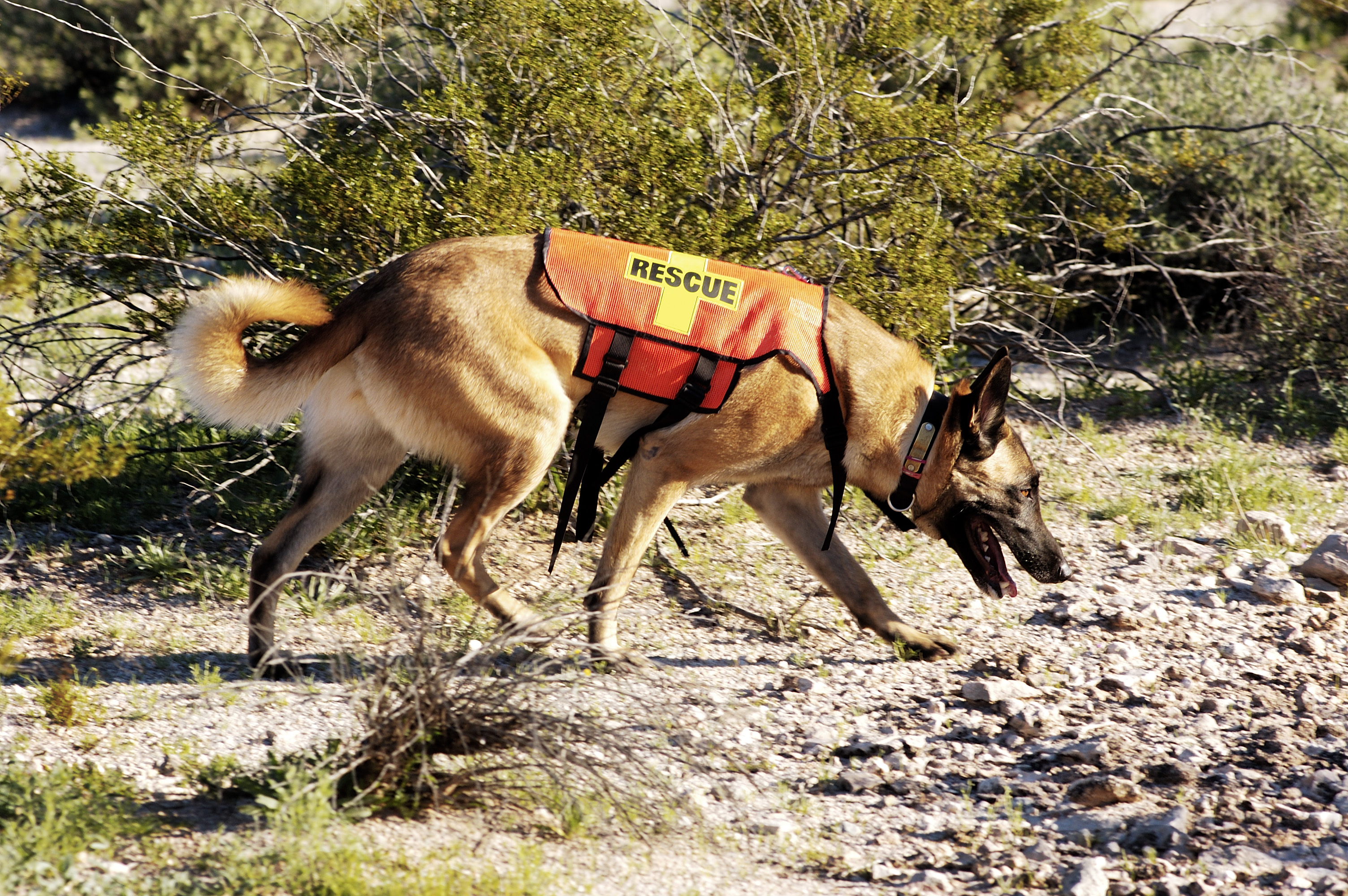rescue dog and handler searching in desert