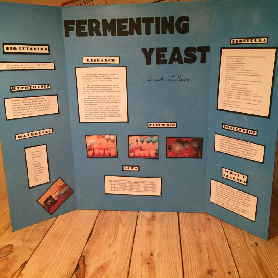 science project yeast fair projects sciencebuddies