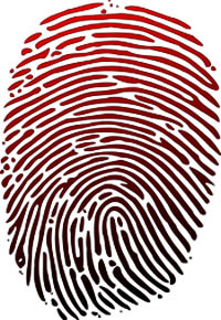 Fingerprint; Adapted from Wikipedia / Wilfredor