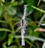 2011-spider-halloween.jpg