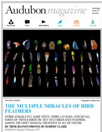 2012-audubon-feathers-200px.png