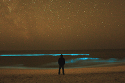 2012-bioluminescence-graytonluminescence-250.png