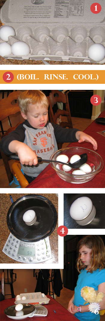 Family Science / Egg shell activity and experiment images
