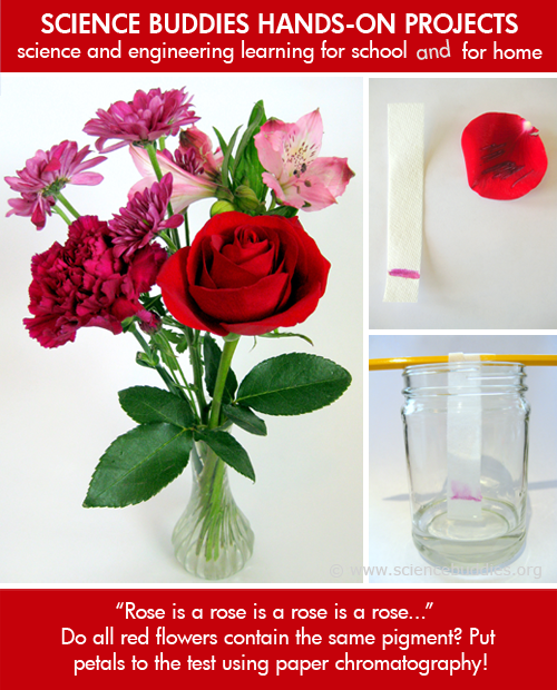 Weekly Science Activity Spotlight / Flower Pigment Chromatography Project for School or Family Science
