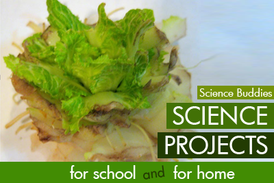 Cabbage Cloning Growing science Activity Family Science Spotlight