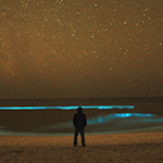 The Wonder of Bioluminescence: Organisms that Glow