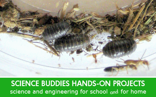 Weekly Science Activity Spotlight / Bugs and Insect Biodiversity Science Project for School or Family Science