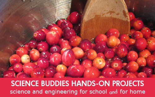 Weekly Science Activity Spotlight / Cranberry Sauce Science Project for School or Family Science