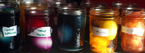 Egg Science / natural dyes