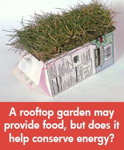 Environmental Engineering / rooftop gardens
