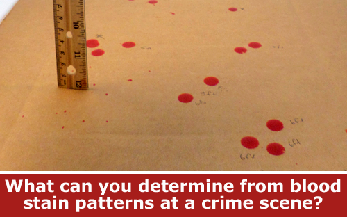 Learn what blood stains reveal in a crime scene physics project / Hand-on STEM experiment