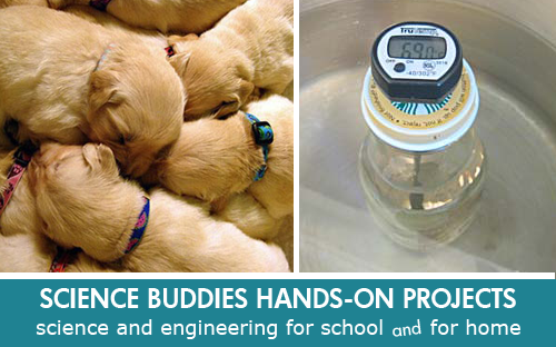 mammalian biology puppy warmth science Science Project / Weekly Family Science Project Highlight