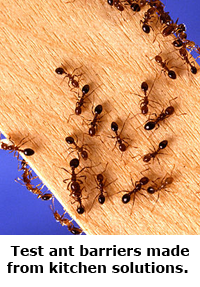 2014 Summer Science Guide: Ant Barrier Science Project
