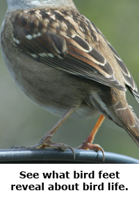 2014 Summer Science Guide: Bird Feet Science Project