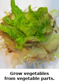 2014 Summer Science Guide: Cabbage Grow Science Project
