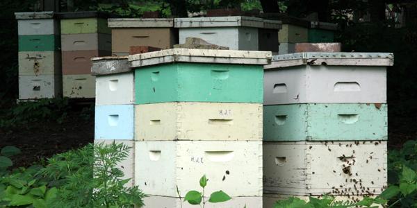Beehives in Mankato, Minnesota