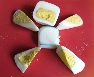 Egg Mold Shapes Hard-boiled Family Science activity