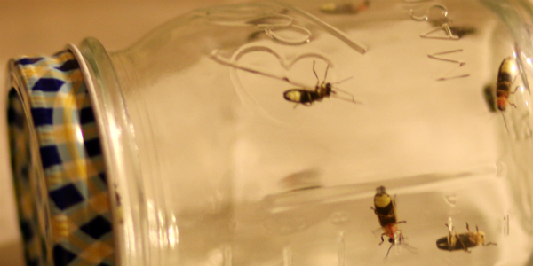 Lightning bugs in a jar / bioluminescence and summer science for families