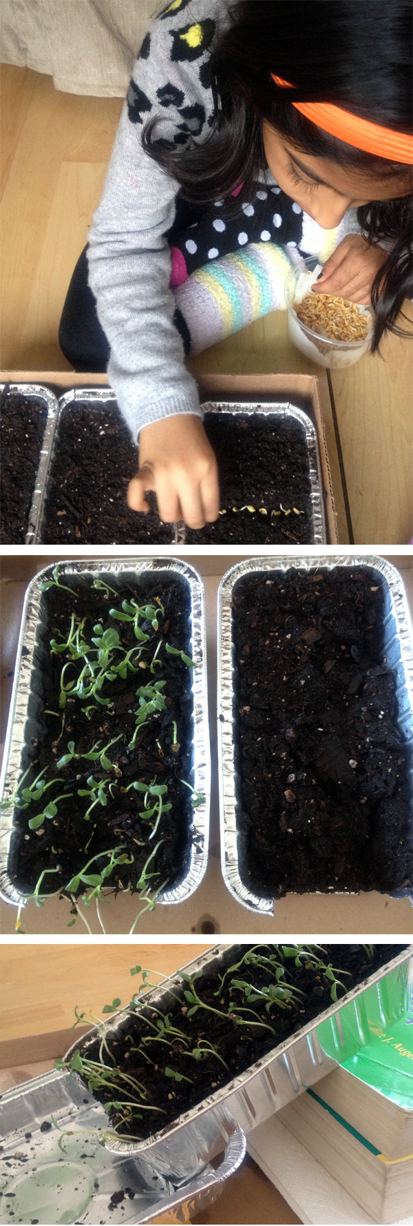 Planting a Solution to Soil Erosion