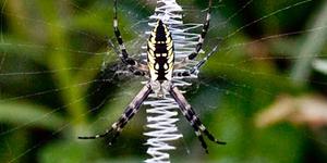 A Spider Variety Show Biodiversity Science