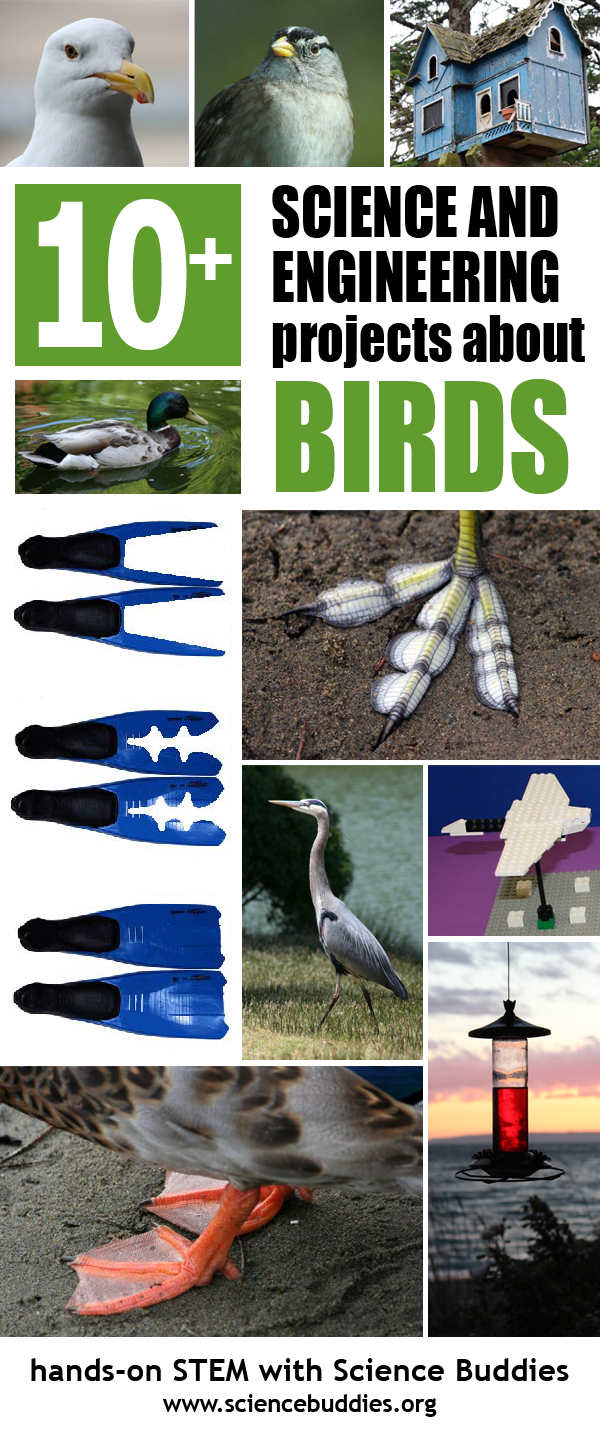 Backyard Bird Science / Student STEM Projects About Birds