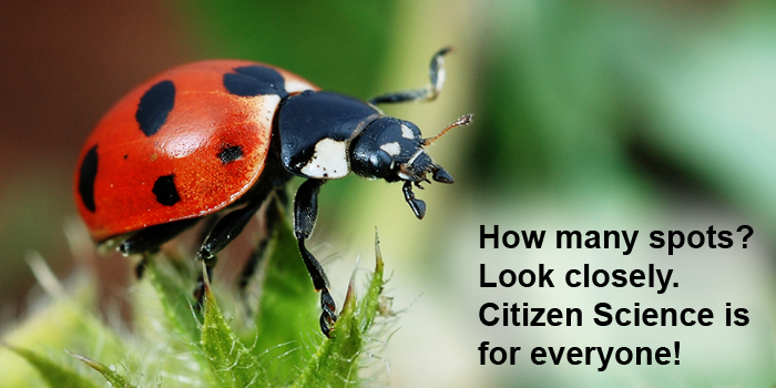 Citizen Science for Earth Day / Ladybugs and the Lost Ladybug Project